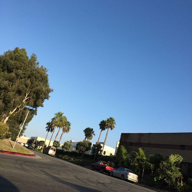 ラジオでロサンゼルスで刺されたらヤバい蚊がいるから気をつけろと言ってる側から3箇所刺されたけど… #losangeles #mosquito #hungtingtonbeach #血吸うたろか #死ぬとか言われた #その前に過労死か?